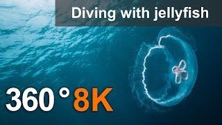 360°, Diving with jellyfish, 8K underwater video